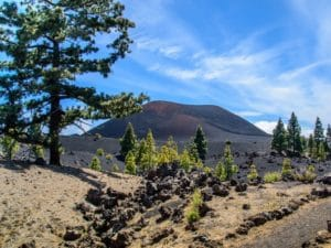 Tenerife-Shore Excursion: Wonderful Volcanic Landscape in Tenerife