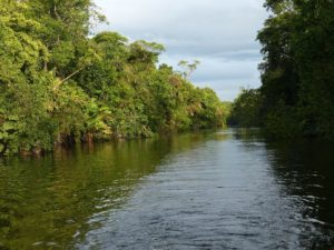 Flora and Fauna at the Tortuguero canals